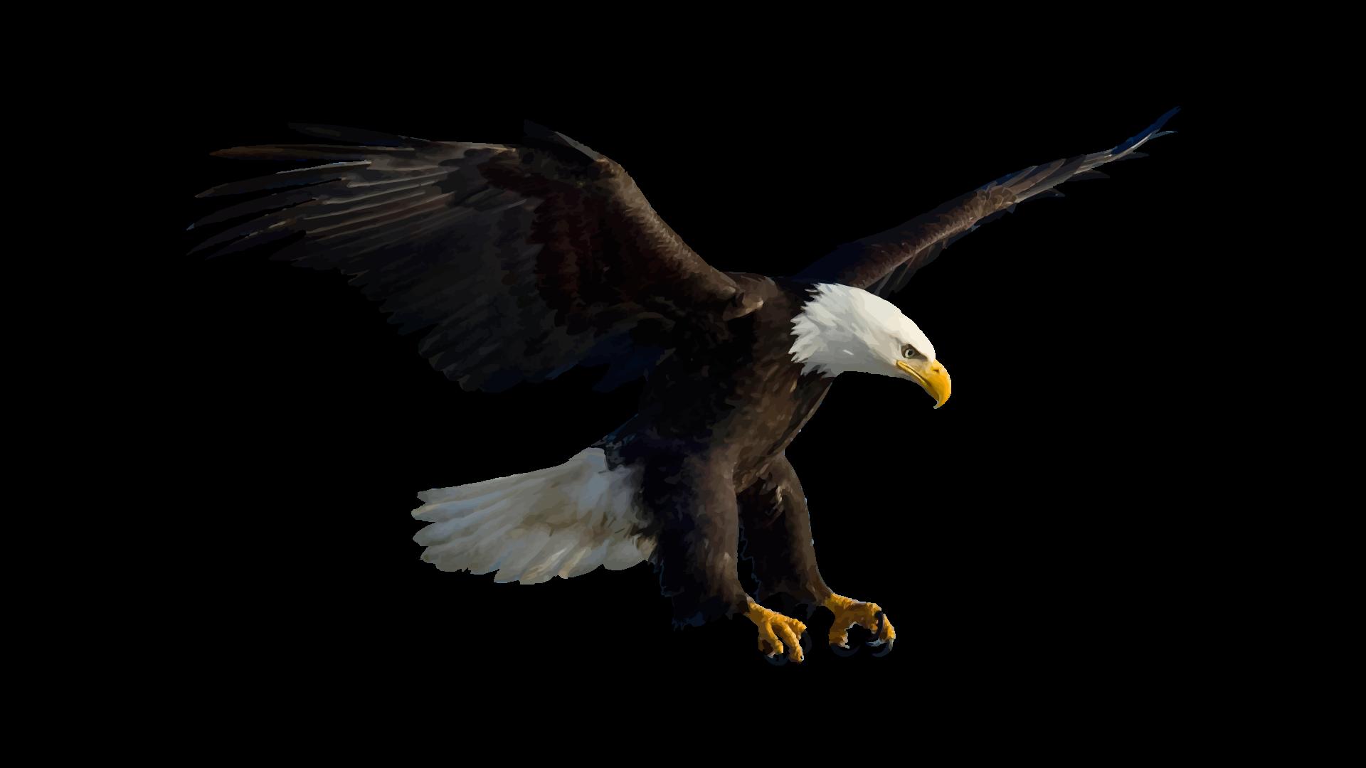 Eagle by walkingstress on DeviantArt