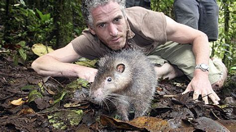BBC   Press Office   Expedition to remote jungle discovers rat as big as a cat