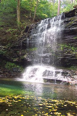 Photo of a relatively small amount of water that drops from a ledge and falls in front of layers of rock into a large pool covered with a scattering of floating green and yellow leaves. Green vegetation is visible on the rocks above and behind the falls.