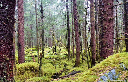 A Walk to Remember: Tongass - Squeaky Green Machine