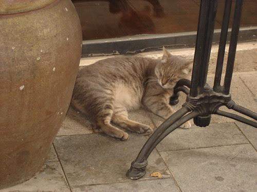 Sleepy restaurant cat