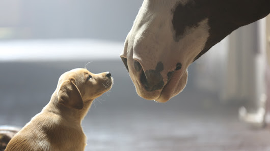 Here Are the Most Effective Ads of 2014 (So Far)