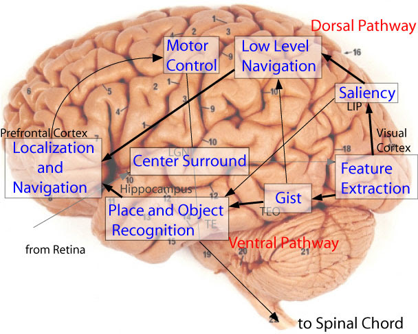 Real Human Brain Labeled