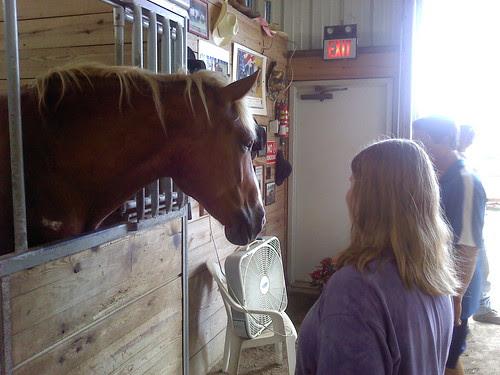 Erie County Fair: Horses