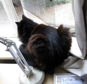 bunly-cat1