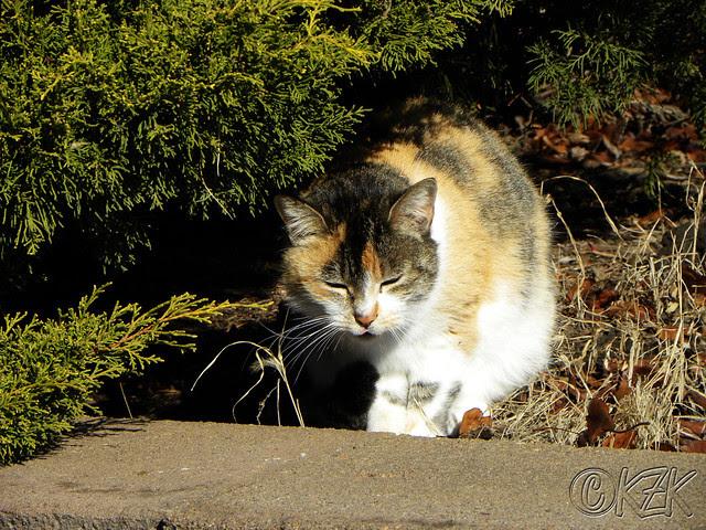 DSCN2748 Callie Co Kitty