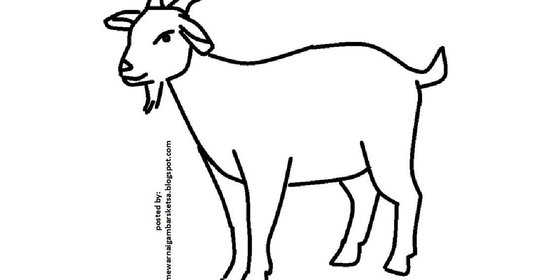 68+ Gambar Sketsa Binatang Untuk Diwarnai Gratis Terbaru
