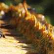 Extreme Anticancer Potential of Propolis