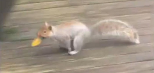 Watch: Squirrel steals bulbs from Christmas lights at Seattle home - UPI.com