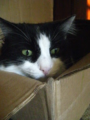 Josie in the box