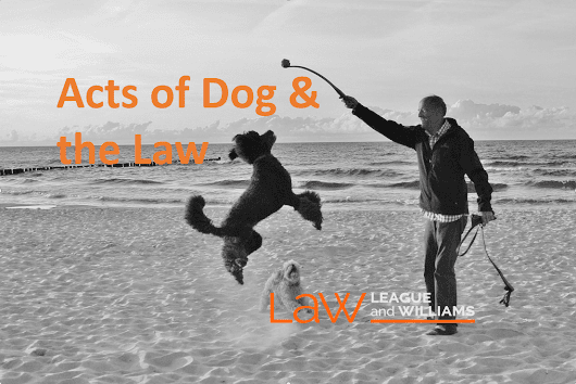 Acts of Dog & the Law in BC: Risk & Responsibility -