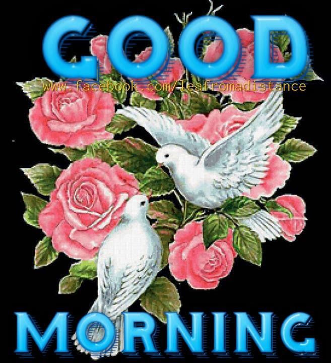 Dove Good Morning Graphic Pictures Photos And Images For Facebook