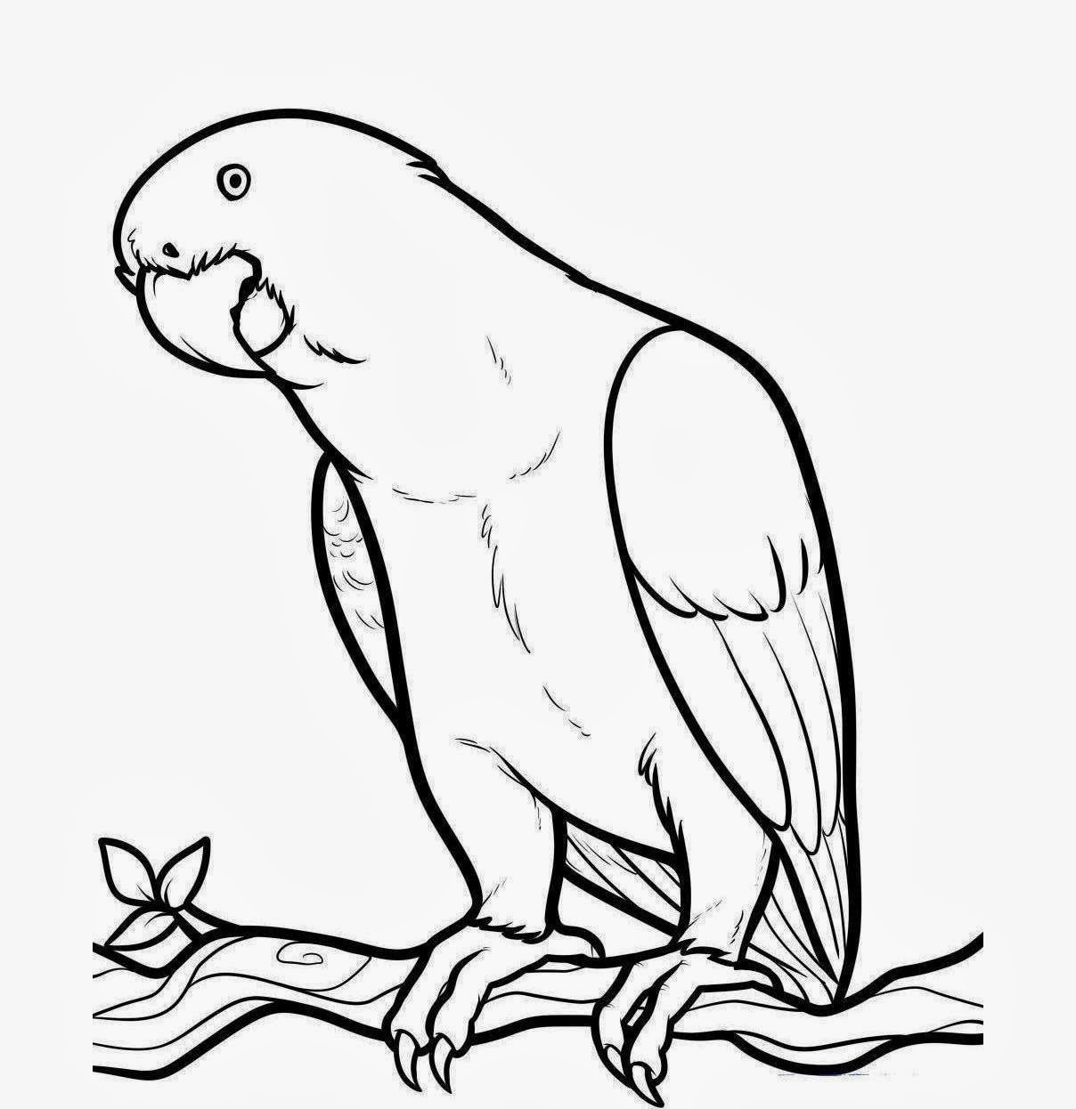 cute parrot drawing how to draw an african grey african grey parrot step 7_1_000000090579_5