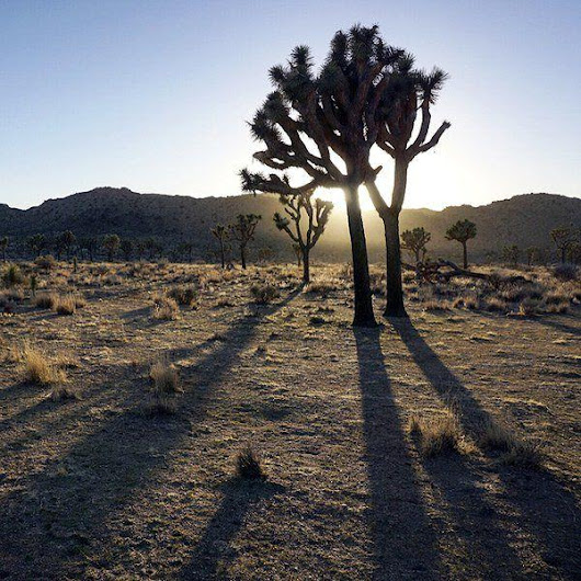 On Nature column: Great deserts stretch across US southwest