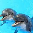 Dolphins aren't smiling and definitely won't heal you
