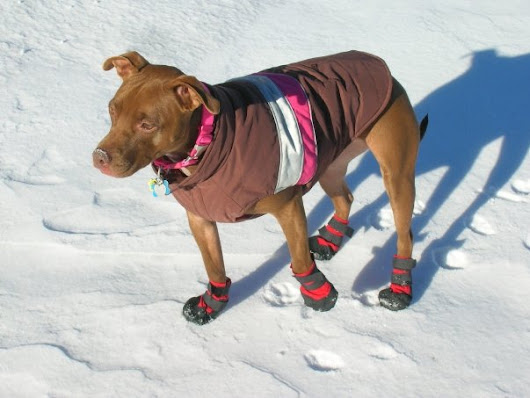 Protect your pets from winter's harsh reality.