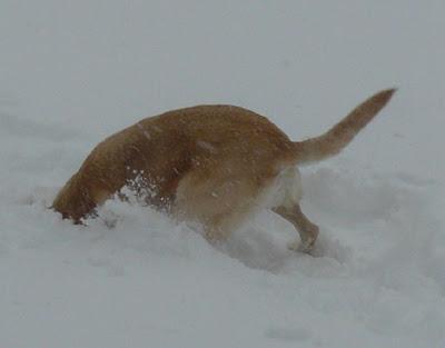 Fun in the snow December 2007