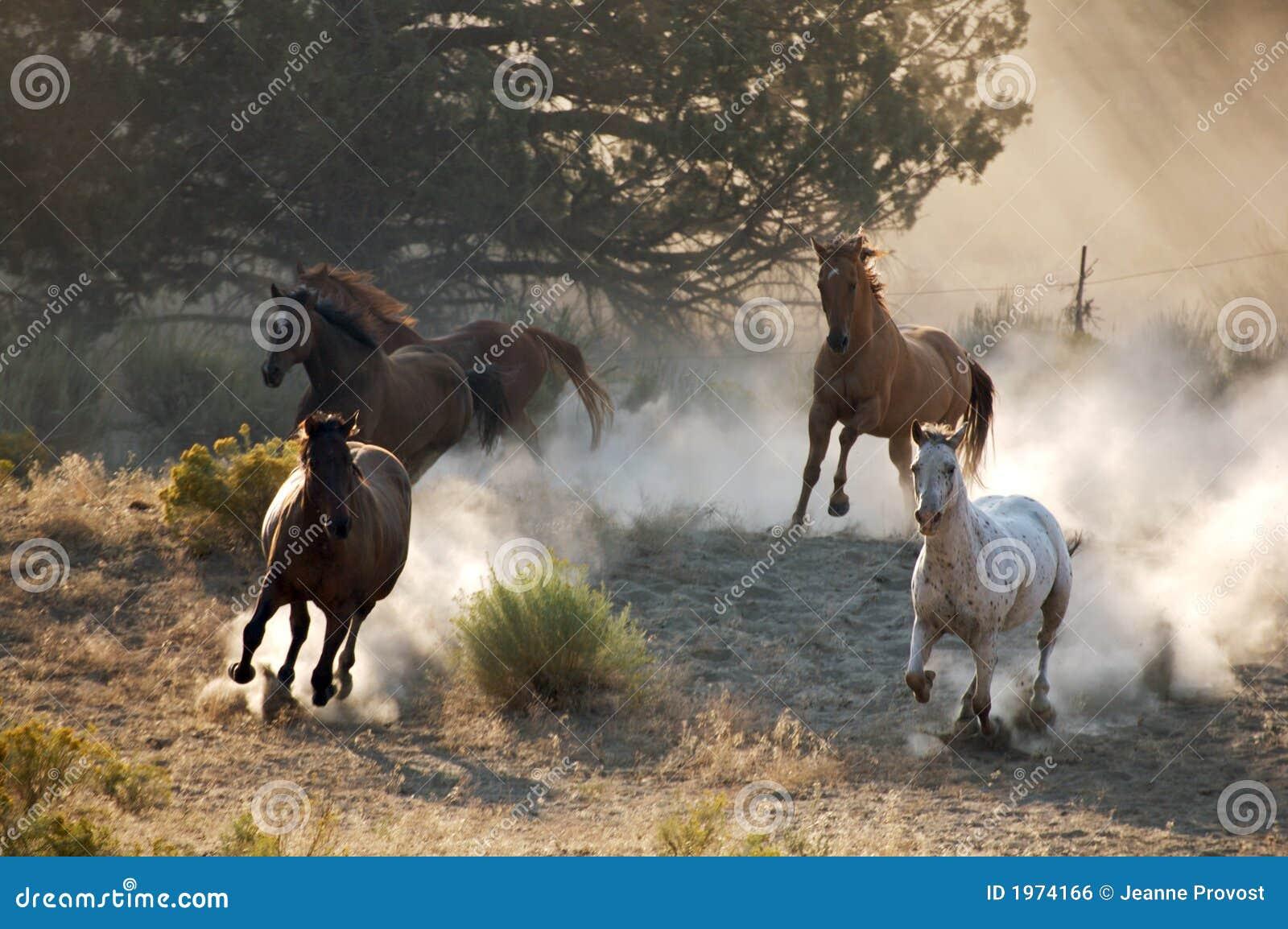 four wild horses 1974166
