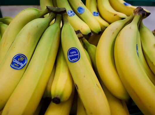 How synthetic biology could solve our banana problem
