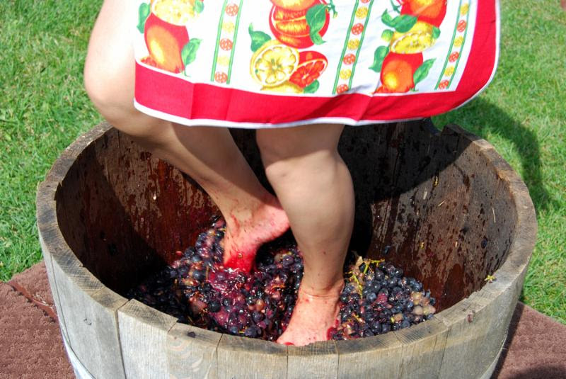 female stomps red grapes in wooden basket