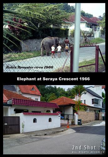 Elephant at Seraya Crescent