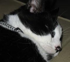 Sleepy Simon