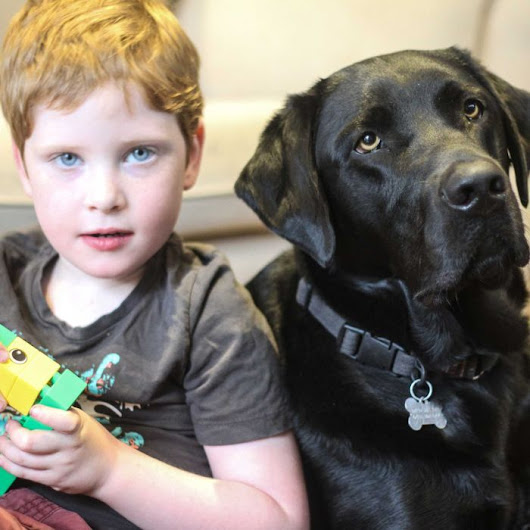 How an autism assistance dog turned a family's life around