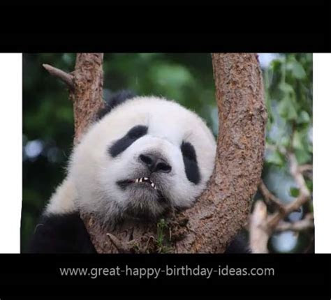Happy Birthday Panda Style. Free Specials eCards, Greeting