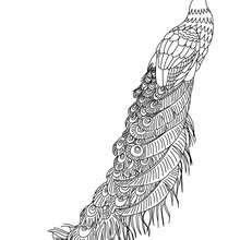 Dibujos Para Colorear Plumas De Pavo Real Eshellokidscom