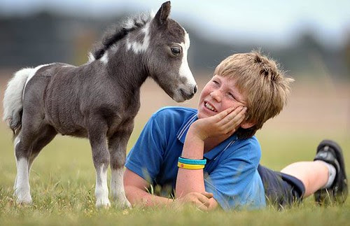 miniature-horse_1122954i