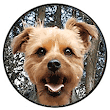 Dog walker, doggy daycare, Hastings - St Leonards and areas, dog walking