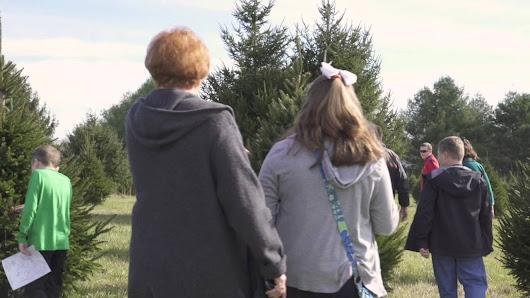 middleburg christmas tree farm the biggest tree you can find - Middleburg Christmas Tree Farm