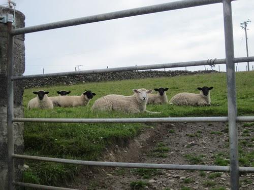 Inishbofin inhabitants
