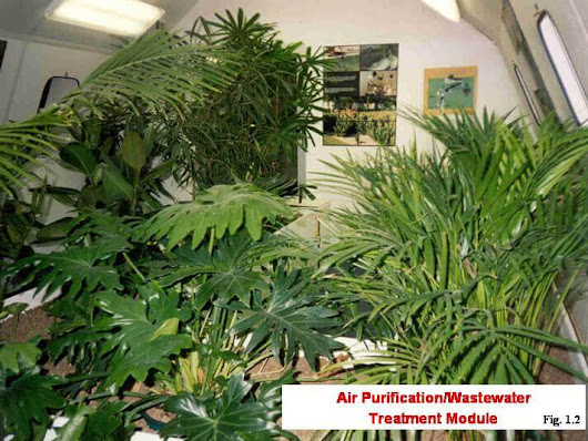 Use Common Houseplants to Clean Air | Snell Heating and AC Omaha Metro