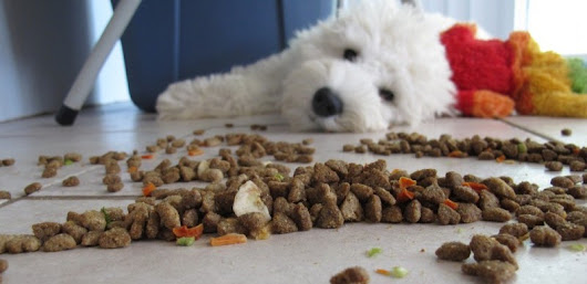 Does Your Pet Food Make The Grade?