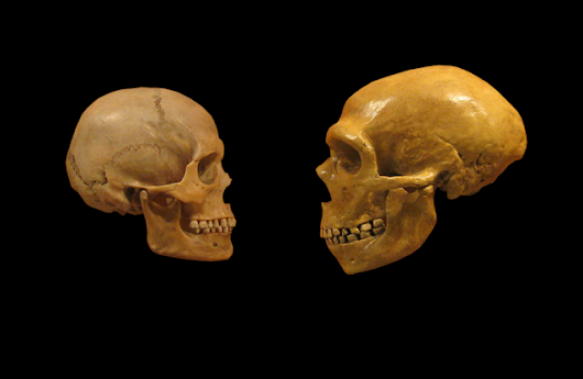 Computer simulation fills in the blanks of Neanderthal extinction