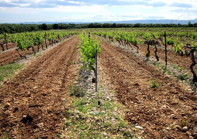 Vigne+Tricastin+Grignan+Les+Adhemar