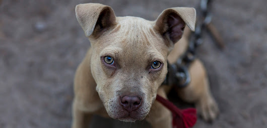 Kentucky, Bill to Protect Victims of Dog Fighting Needs You!