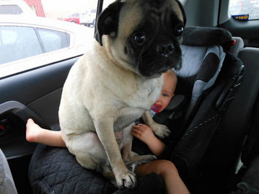 15 Hilarious Dogs Who Have Absolutely No Understanding Of Personal Space – ReHUB