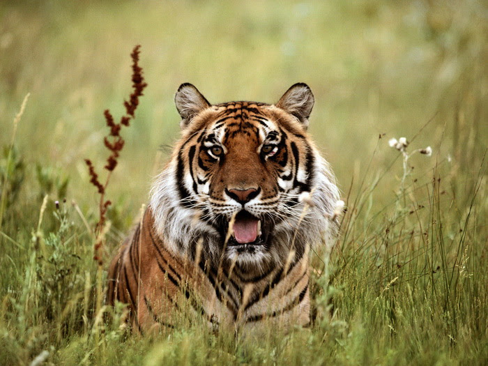 awesome-wild-animal pictures