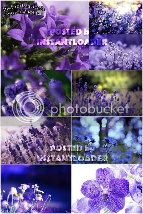 Violette Flowers - StockPhotos