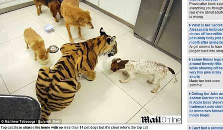 Enzo divide a casa com os gatos também
