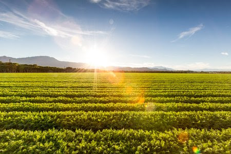 Sustainable Agriculture: Farming for the Future - Agrismart