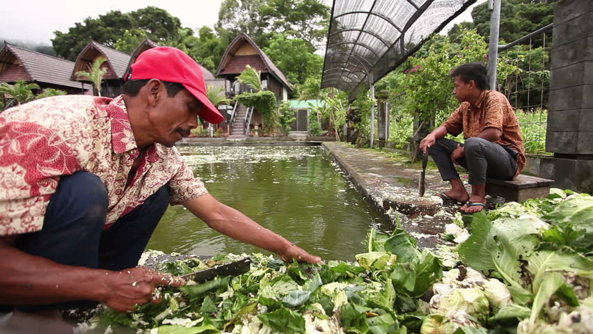 A Shot Of Batur Danau Lake, Bali Stock Footage Video 2891617  Shutterstock