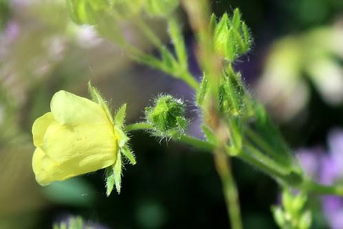 IMG_0261_Wildflowers