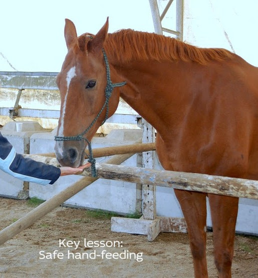 Key Lesson: Table Manners for Horses [safe hand-feeding]