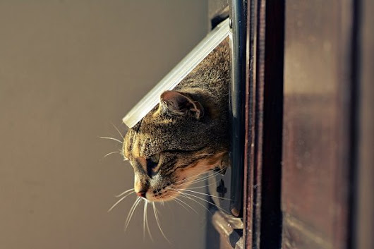 Are Pet Doors a Gateway for Crime? | Perth | Stan Bond Security