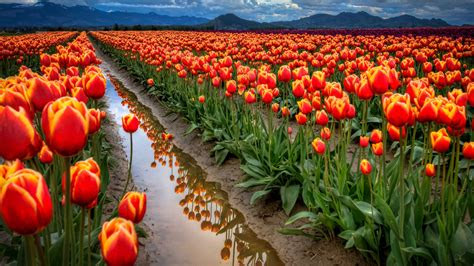 flower landscape wallpaper wallpapersafari
