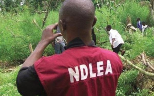 105 Drug Dealers Arrested In Bayelsa In 6 Months – NDLEA Reveals