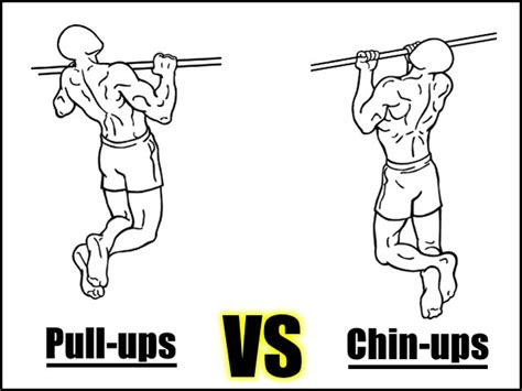 pull ups  chin ups      builds